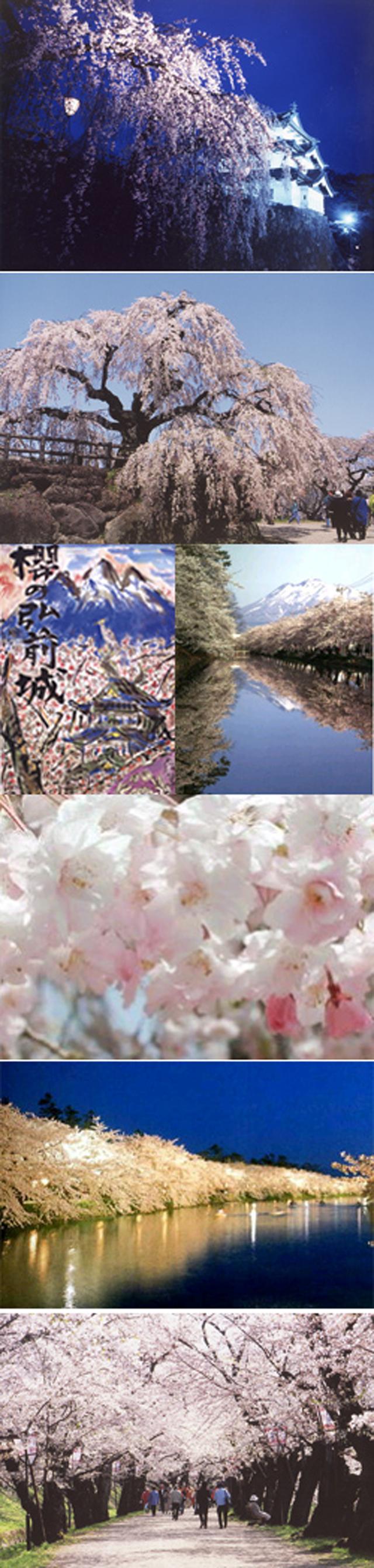 弘前のさくらを10倍楽しむ方法(5/5)