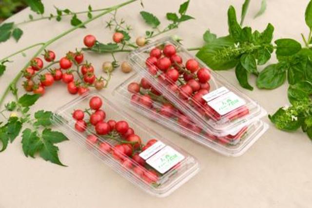 あのハーブ園が育てた原種トマト 「インカトマト」