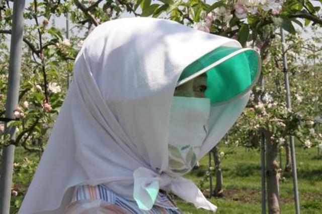 """りんご園の美しい""""頬かむり"""""""