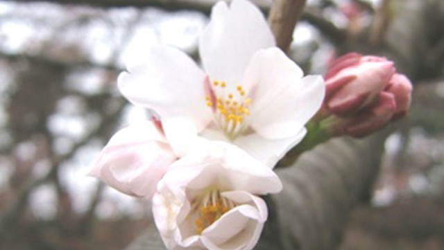弘前公園の楽しみ方