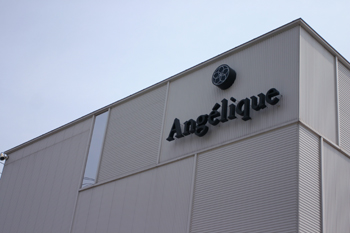 Angelique(アンジェリック)