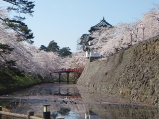 弘前の桜まつり