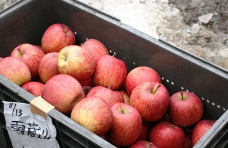 まるで食べるりんごジュース!岩木山雪蔵りんご