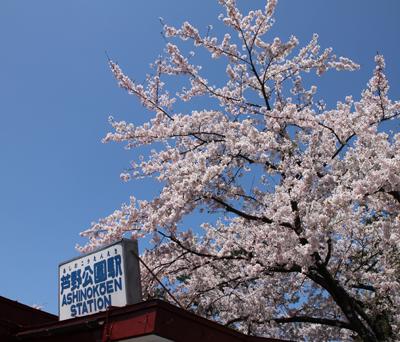 まだまだ桜は見応え十分です。