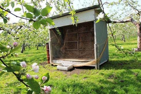 りんご生産者が、ハチを増殖中