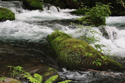 渓流ランブリング