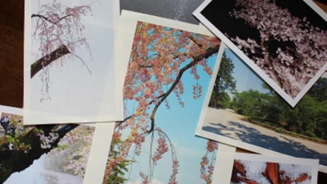弘前の桜に魅せられた写真家「景山正夫写真展」