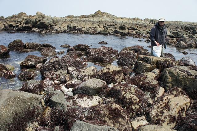 春の種差海岸トレッキング