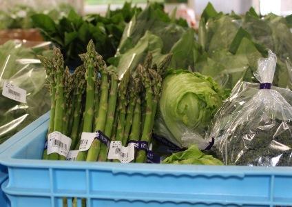週末ファーマーが集う「ふれあい農園」で無農薬野菜づくりに挑戦