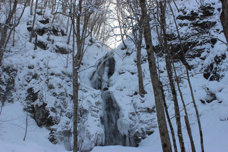 冬の「奥入瀬、蔦の森」の楽しみ方。
