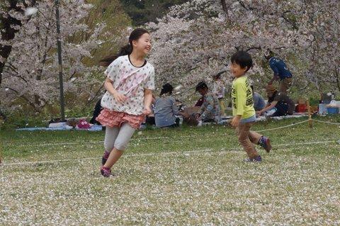 桜吹雪舞う芦野公園で昭和のお花見を