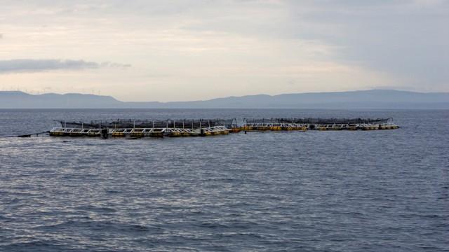 あの津軽海峡で育てた「海峡サーモン」1