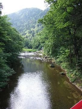 森林散策でココロを洗濯~薬研渓流1