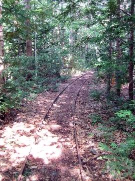森林散策でココロを洗濯~薬研渓流2