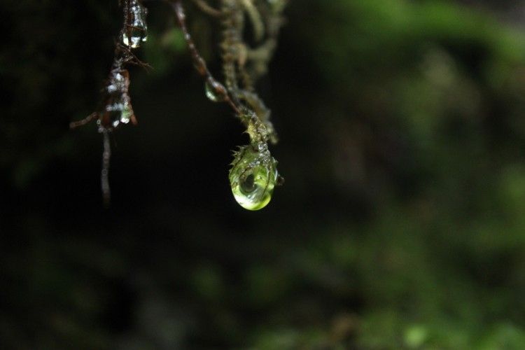 雨の奥入瀬を撮りまくる。