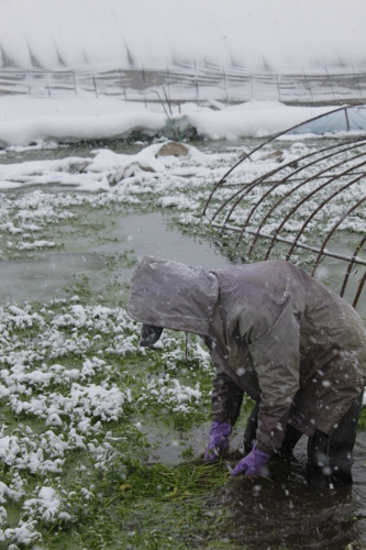 津軽の冬が育む野菜たち
