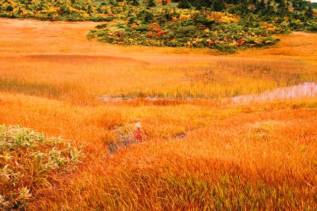 青森で最も早い紅葉「八甲田の草もみじ」