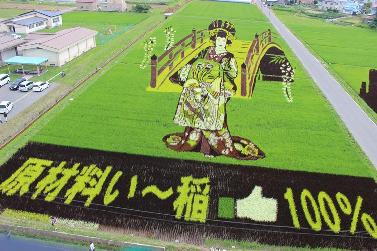 田んぼアート、今年は「花魁」!