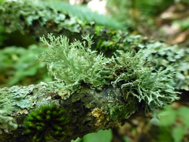 まるで「森のサンゴ」。