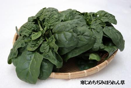 寒さを味方にしたすごい野菜「寒じめ菜」