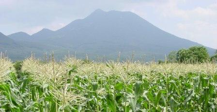 日本一うま~い「嶽きみ」