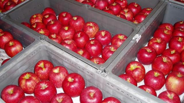 あ~かい~りんご~に、くちび~る・・・青森りんご全国へ発進中!
