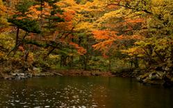 いざ紅葉の十和田湖へ!4