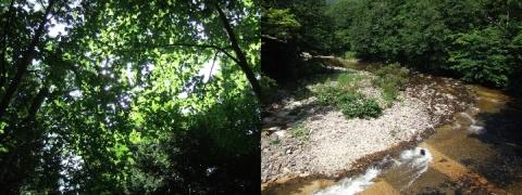 森林散策でココロを洗濯~薬研渓流3