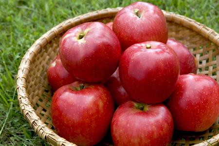 甘くてすっぱい噂のりんご 「彩香(さいか)」
