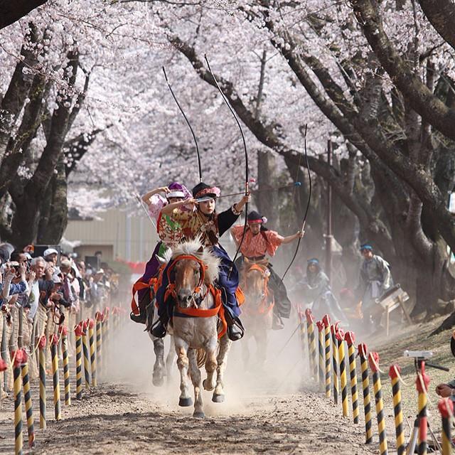 桜の下の流鏑馬