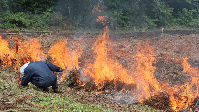 焼き畑点火