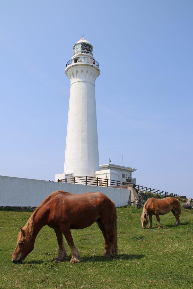 灯台と寒立馬
