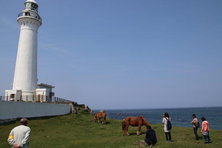 灯台と寒立馬と海と観光客の皆様。