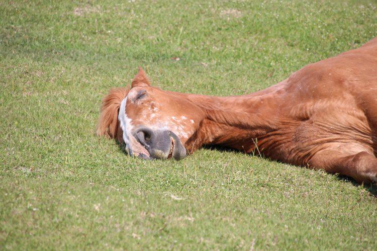 寝た寒立馬