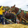 [馬力大会in中泊町] 人馬一体 馬とともに中泊町の歴史・文化を紡ぐ