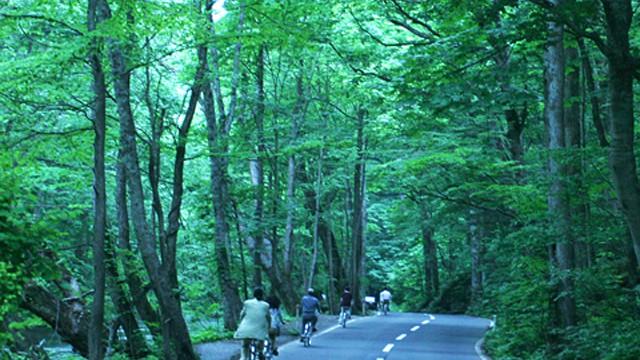 奥入瀬サイクリング