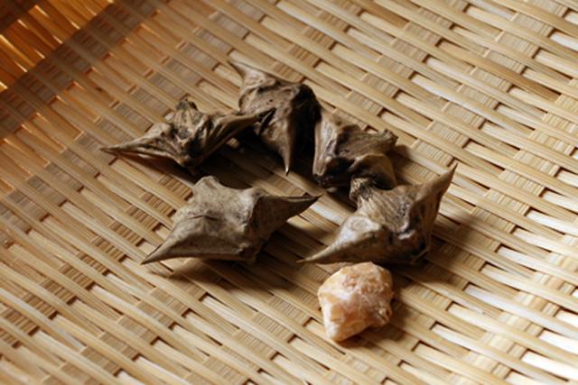 小川原湖で見つけた幻の「菱の実」