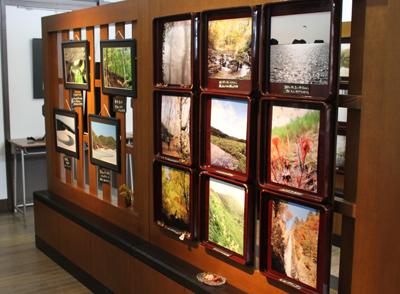 米ちゃんの写真展「こころの森・・・」