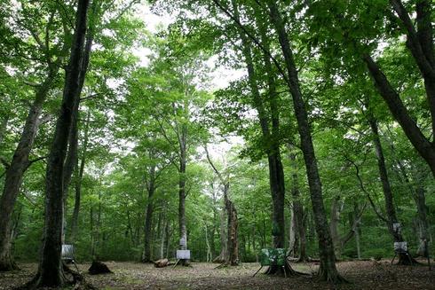「田代の森の写真展」
