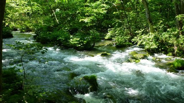 奥入瀬渓流「学びの旅」のススメ