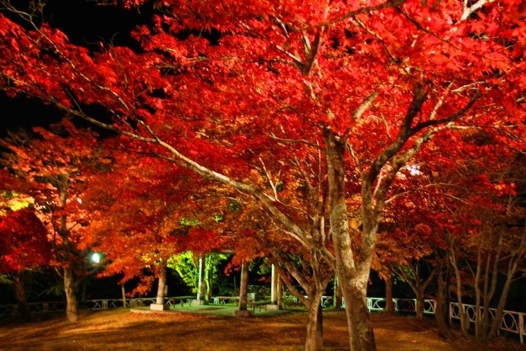 中野もみじ山の紅葉が見頃です!