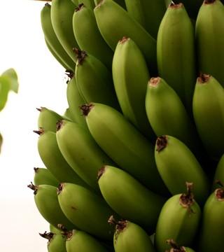 青森のバナナ