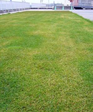 やさしい緑化基盤「プラム・エコ・システム」