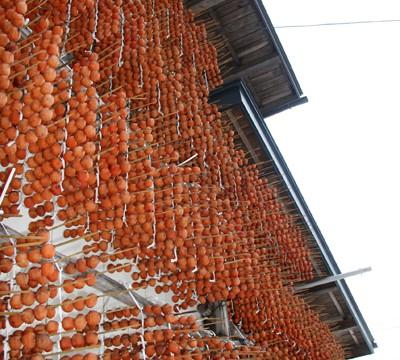 南部地方伝来のカキ 「妙丹柿(みょうたんがき)」