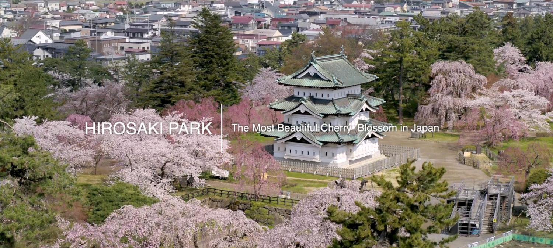 弘前公園桜ドローン