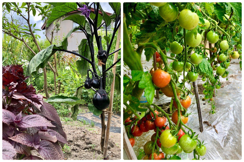 野菜の種類も豊富!